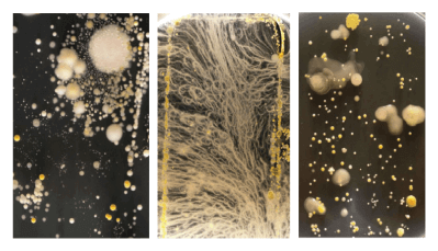 Bacteria-on-devices-university-surrey